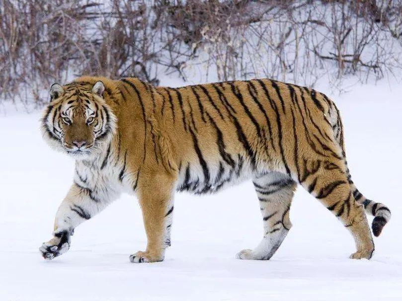 """明明姓""""虎"""",偏说自己是""""猫"""",这个奇葩的姓氏你听过吗?"""